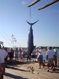 Winning Catch for the Billfish Tournament 2010